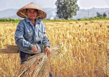 陈里:新时期如何解决土地问题以实现乡村振兴
